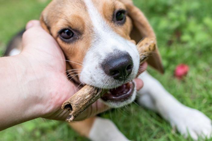 Adestramento de cães é tema de palestra gratuita em Curitiba