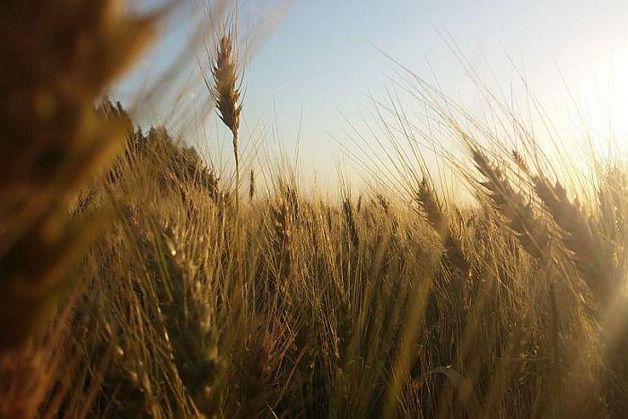 Agronegócio impulsiona mercado de trabalho no Paraná