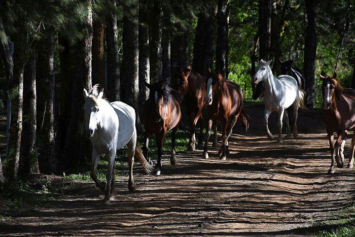 Que tal realizar sonho de andar a cavalo no Carnaval?