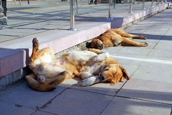 Projeto quer ampliar o número de castrações gratuitas de cães e gatos nas cidades paranaenses