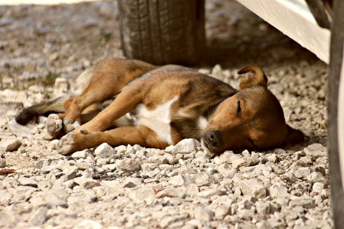 Cascavel receberá Castramóvel para controle de superpopulação de animais e de zoonoses