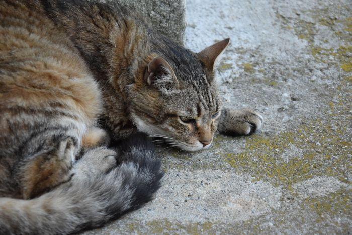 Protetores animais de Quatro Barras conhecem projeto Castramóvel