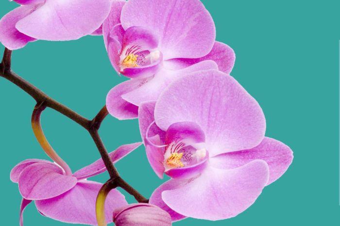 4ª Exposição de Orquídeas no Shopping Jardim das Américas