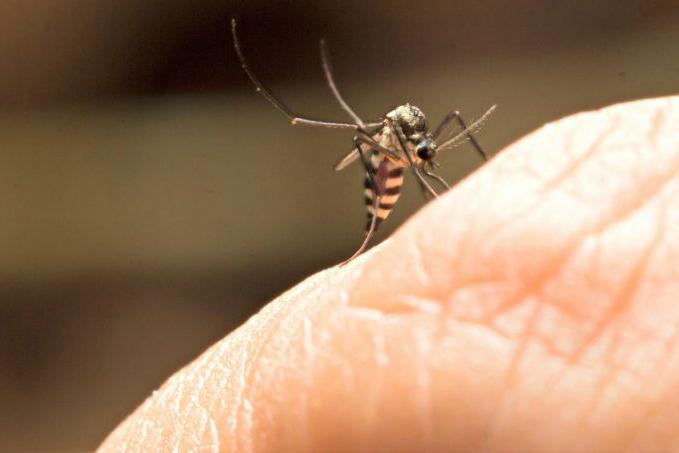 Foz do Iguaçu nunca registrou casos de Febre Amarela