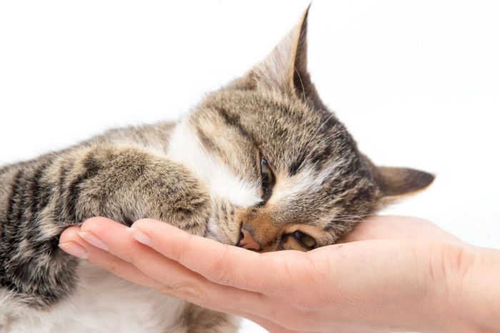 Pet center promove eventos para apaixonados por animais