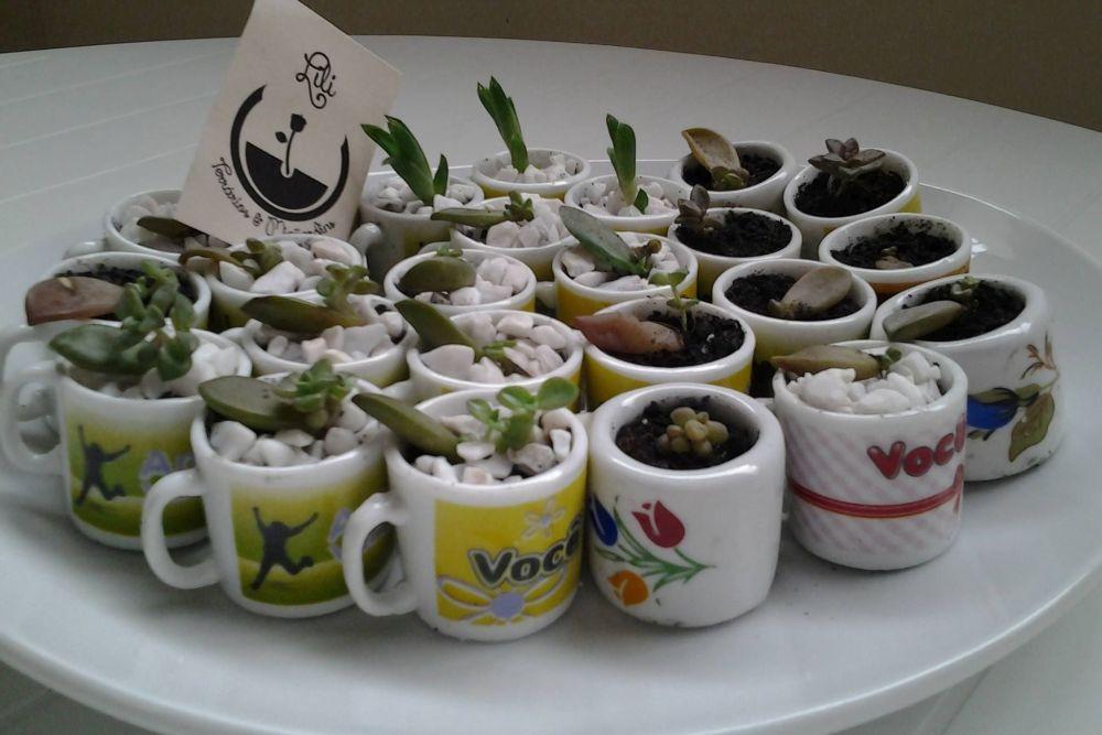 Curso oferece lições de como cuidar bem das plantas em casa